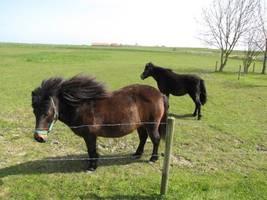 Unsere Ponys sind das absolute Highlight für pferdebegeisterte Mädchen