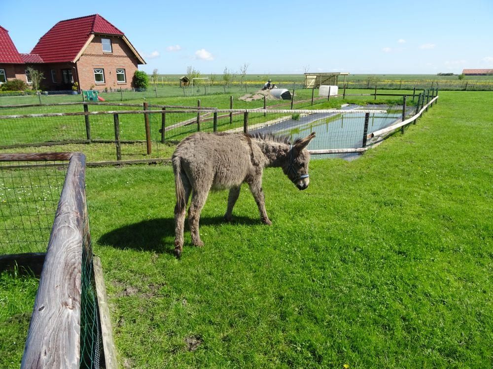 Esel auf dem Bauernhof
